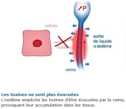 Veines4